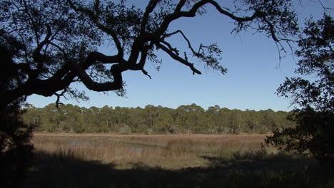 Florida-La-Rama-De-Un-árbol-En-Silueta-Enmarca-Una-Vista-De-Un-Pantano