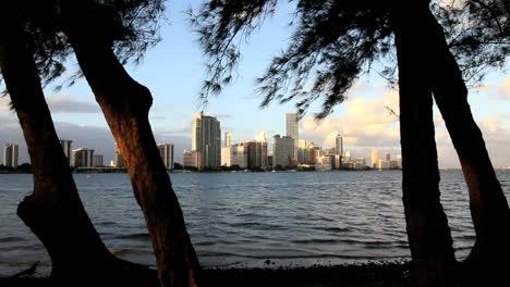 Florida-Miami-Skyline-Umrahmt-Mit-Vier-Bäumen