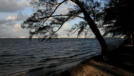 Florida-Miami-Beach-Skyline-Umrahmt-Mit-Baum