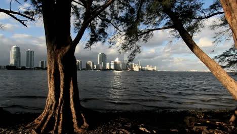 Florida-Miami-Skyline-Sonnenlicht-Auf-Baum-Mit-Skyline-Darüber-Hinaus