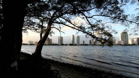 Florida-Miami-Skyline-Zwei-Bäume-Links