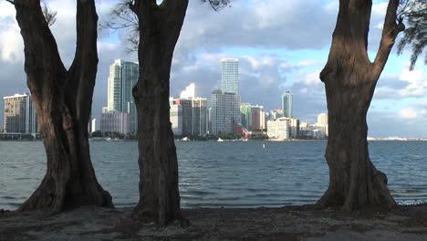 Florida-Miami-skyline-with-three-trees