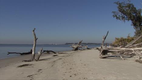 Florida-Driftwood-En-Una-Playa-De-Arena