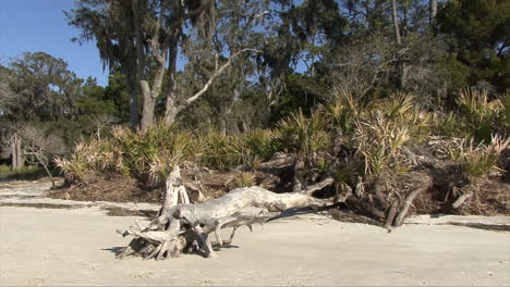 Florida-Flotante-Palmetto-Y-árboles