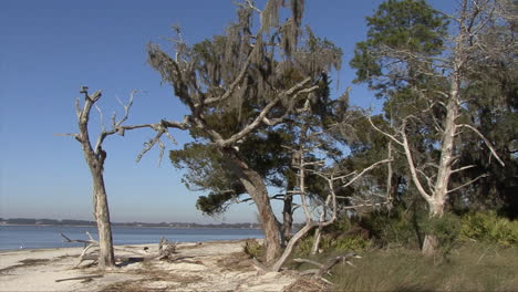Florida-Sartenes-Desde-Bosques-Hasta-árboles-Muertos-En-Una-Playa