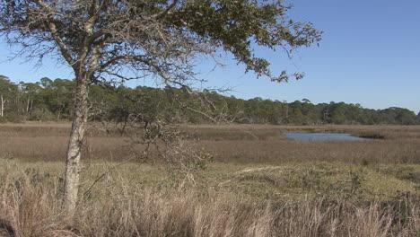Florida-tree-frames-a-wetland-view