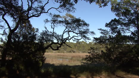 Florida-trees-frame-a-view-of-marsh-grass