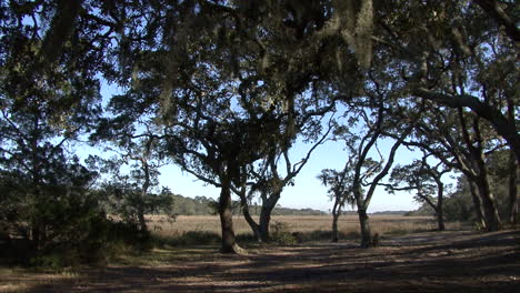 Florida-trees-stand-on-the-edge-of-a-marsh