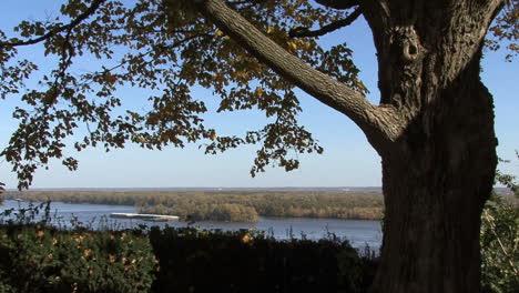 Iowa-Burlington-tree-frames-Mississippi