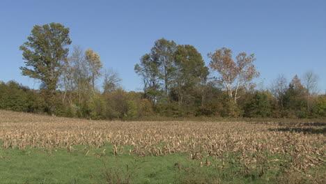 Iowa-corn-field-after-harvest