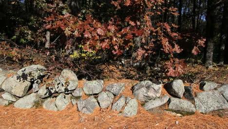 Massachusetts-New-England-stone-wall-with-oak