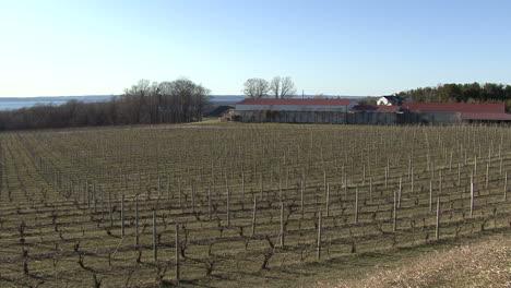Michigan-barren-vineyard-by-lake