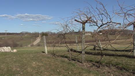 Michigan-road-past-barren-grape-vines