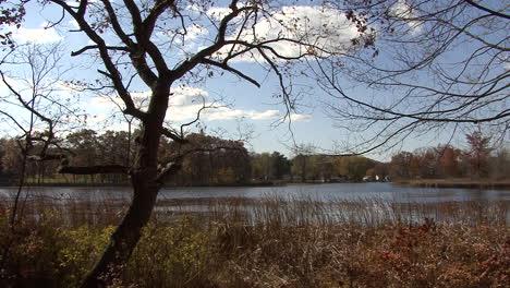 Arcos-De-árboles-De-Michigan-Sobre-El-Lago