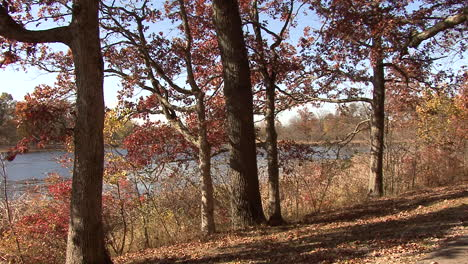 Michigan-trees-on-edge-of-lake-in-fall