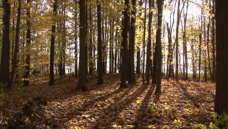 Michigan-woods-in-fall