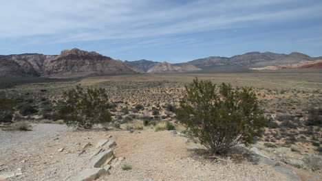 Red-Rock-Canyon-Nevada-with-creosote-bush