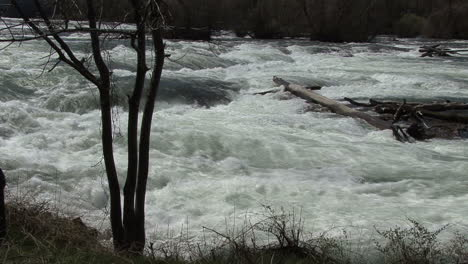 New-York-Niagara-with-tree-and-log-in-water