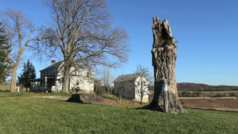 Pine-Island-Nueva-York-Casa-Y-árbol-