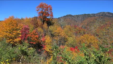 North-Carolina-Appalachian-fall-color-pan-left