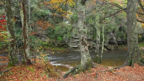 North-Carolina-Appachian-River-Mit-Bäumen-Auf-Bank-mov