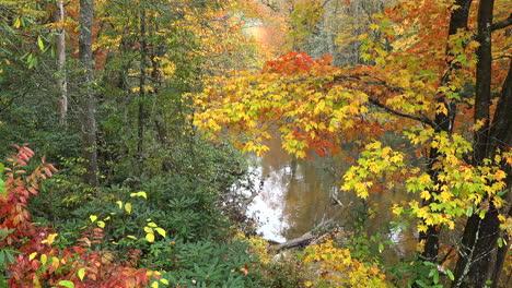 North-Carolina-Appalachian-woods-mov