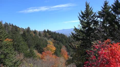 Parque-De-Las-Montañas-Humeantes-De-Carolina-Del-Norte-árboles-De-Hoja-Perenne