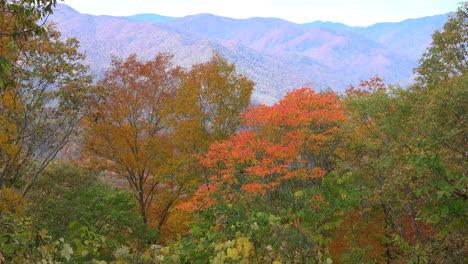 North-Carolina-Smoky-Mountains-beyond-fall-trees