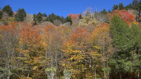 North-Carolina-Smoky-Mountains-colorful-fall-hillside
