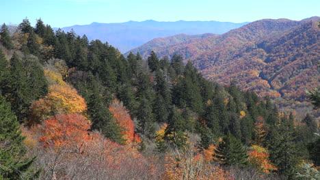 North-Carolina-Smoky-Mountains-mixed-forest
