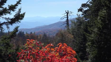 Carolina-Del-Norte-Montañas-Humeantes-Hojas-Rojas-Y-Enganche