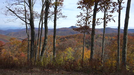 Montañas-Humeantes-De-Carolina-Del-Norte-Con-Arbolitos