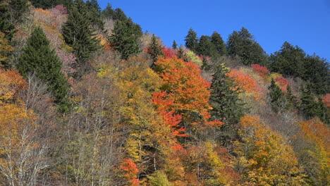 Carolina-Del-Norte-Montañas-Humeantes-Zoom-En-Rojo-Otoño-Hojas