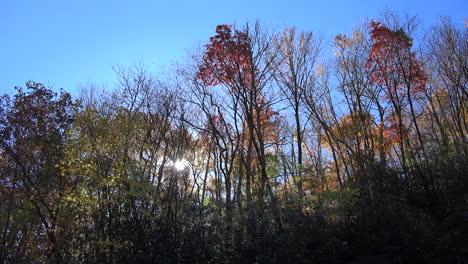 árboles-De-Carolina-Del-Norte-Y-Solarium
