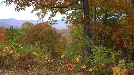North-Carolina-fall-at-Thomas-Divide