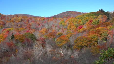 North-Carolina-fall-trees-on-slope-pan-mov