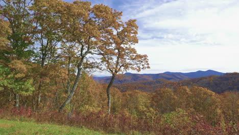 North-Carolina-oak-trees-frame-mountain-view