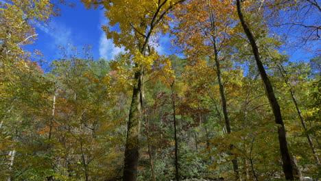 Carolina-Del-Norte-Se-Inclina-Hacia-Los-árboles-De-Otoño