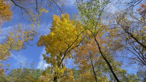 Carolina-Del-Norte-Hojas-Amarillas-En-Otoño-árboles