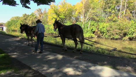 Ohio-Miami-and-Erie-Canal-with-horses-pulling-boat