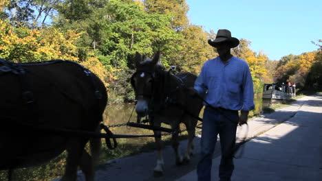Ohio-Pferdekahn-Auf-Miami-Und-Erie-Canal