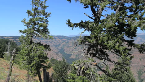 Oregon-Hells-Canyon-framed-with-trees