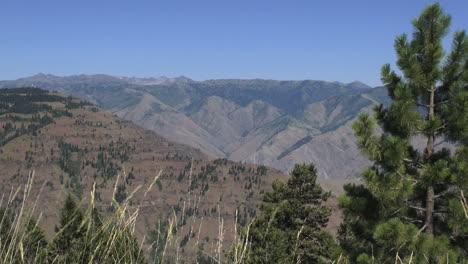 Oregon-Hells-Canyon-with-pine-tree