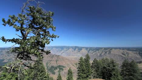 Oregon-Hells-Canyon-with-stunted-tree-on-rim