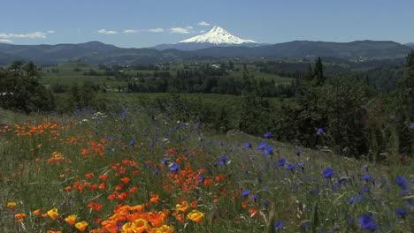 Oregon-Mount-Hood-Y-Flores-En-El-Viento
