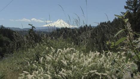 Oregon-Mount-Hood-and-grass