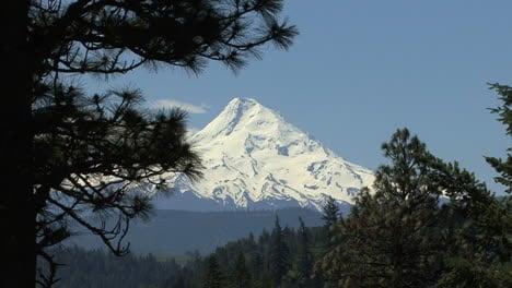 Oregon-Mount-Hood-and-pine-branches