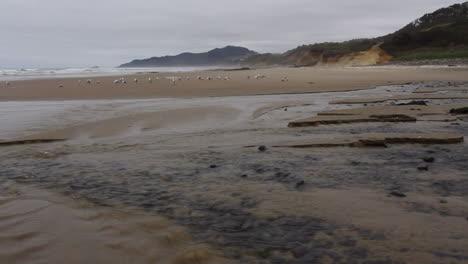 Oregon-coast-stream-low-tide