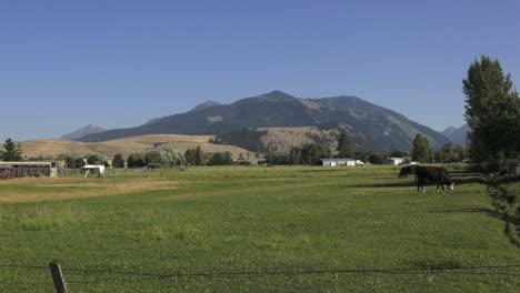 Oregon-landscape-with-cow-grazing-en-route-Pendleton