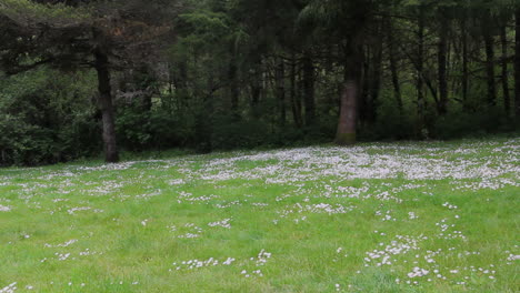 Oregon-Flores-Silvestres-Y-Bosques-Oscuros